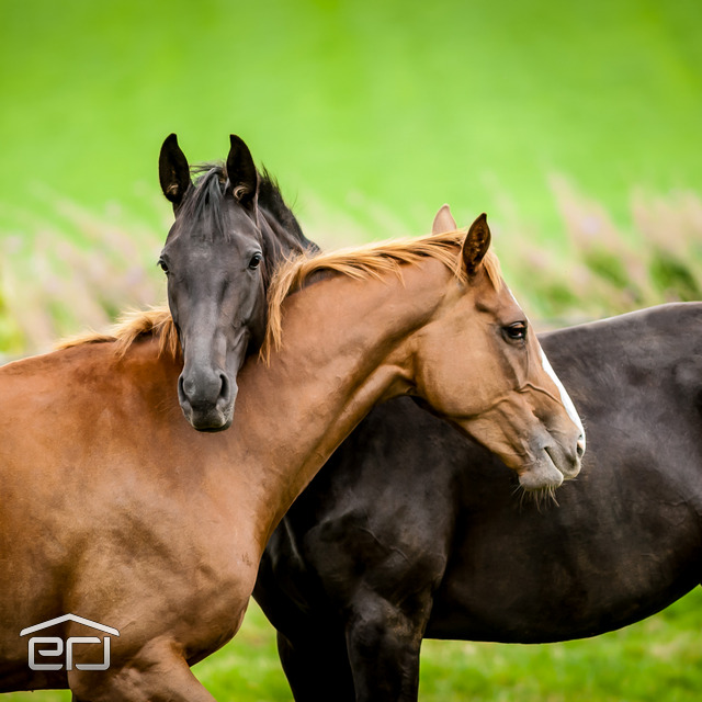 Florida Horse Farm real estate in Citrus County, Coldwell Banker Next Generation Realty